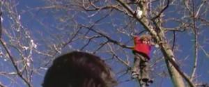 Miracle-de-noel-dans l'arbre